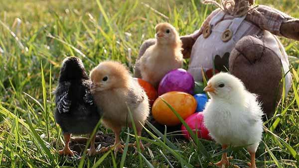 Sabere Natur nach Plogging zu Ostern