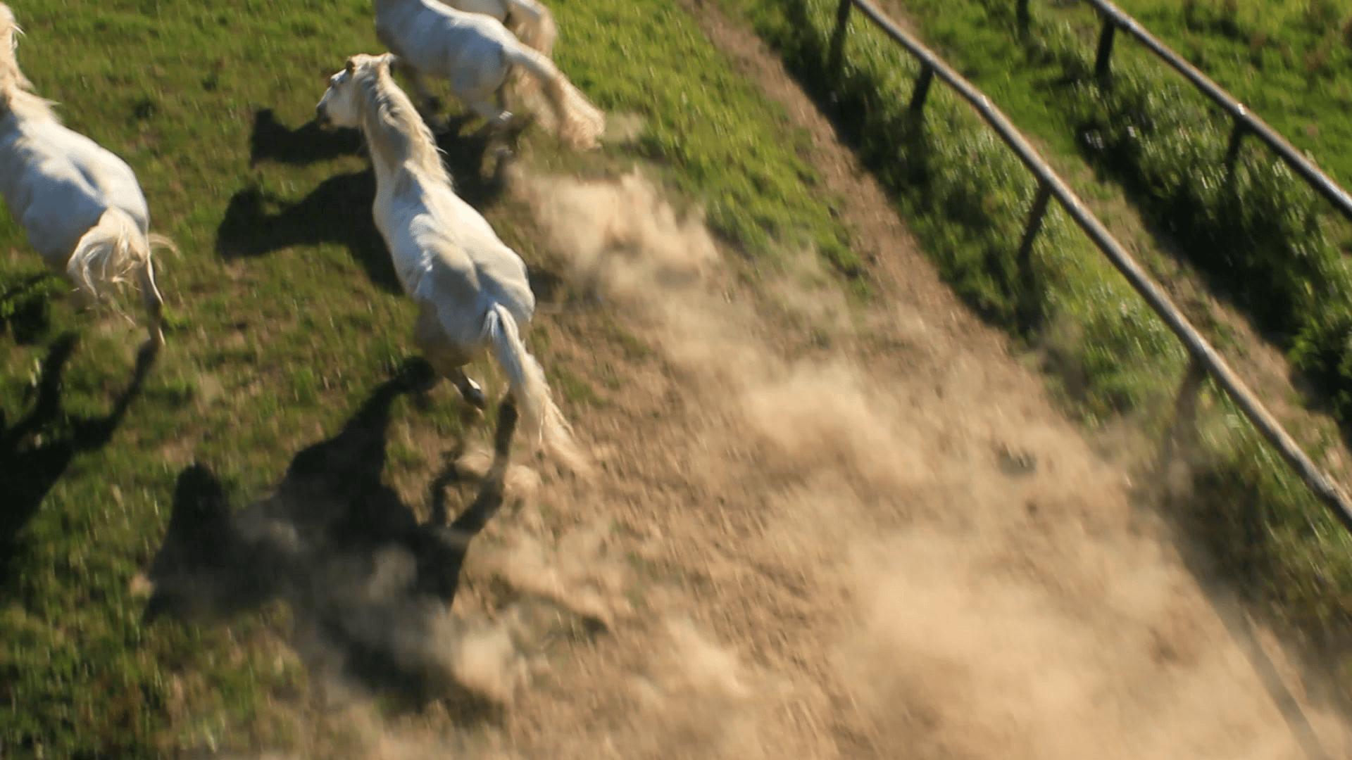 Pferde - eine Attraktion für mehr Tourismus