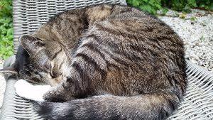 Katze Fritzi