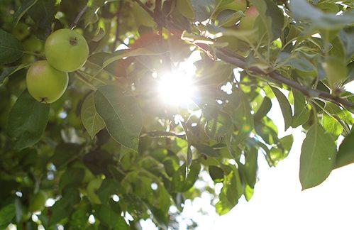 Garten, Entspannung, Sonnenschein