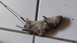 Stellenangebot Mäusefänger