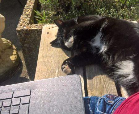 Katze und Computer im Homeoffice